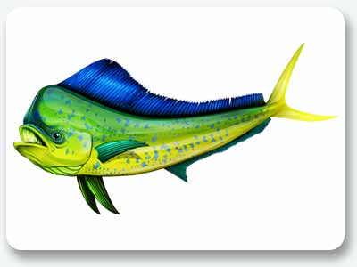 Fish-Graphics-Dolphin-Fish